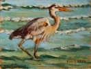 Coastal seagulls, pelicans, and other seabirds in original fineart oil painting by Flint Reed